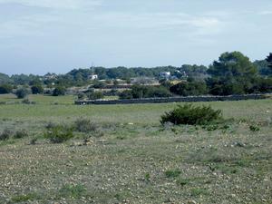 Camps de conreu a la zona de can Rita, a la vénda des Molí-s´Estany. Foto: Vicent Ferrer Mayans.