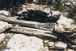 El coll del pou de can Mossènyer, situat a llevant de l´estany Pudent. Foto: Joan Marí Cardona.