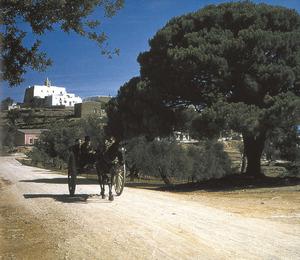 El desaparegut pi d´en Noguera, que era just a l´arribada del poble de Sant Miquel de Balansat. Extret d´<em>Eivissa Ibiza - l´illa d´un temps</em> / foto: Hans Helfritz.