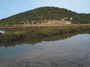 El puig des Pantano, a les salines d´Eivissa. Foto: Felip Cirer Costa.