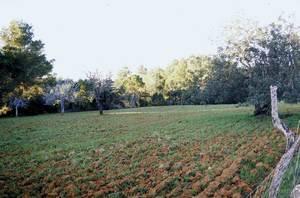 Las Pithyusas –Societat Econòmica d´Amics del País–, entre altres coses, va proposar la creació de planters de diferents arbres per tal de millorar la producció agrària. Foto: Josep Antoni Prats Serra.