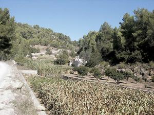 L´hort de sa Plana, a Buscastell. Foto: Felip Cirer Costa.