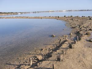 Riba de l´estany des Peix, a la zona NE de la vénda de Porto-salè. Foto: Vicent Ferrer Mayans.