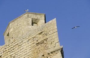 El mestre d´obres Gaspar Puig va treballar tant en la reparació de les murades medievals com en l´aixecament de les renaixentistes. Foto: Vicent Marí.