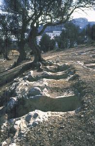 Necròpolis del Puig des Molins. Diversos hipogeus excavats a la roca. Foto: Museu Arqueològic d´Eivissa.