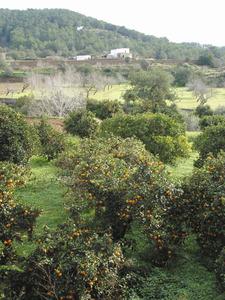 Sa Raconada, a la vénda de Buscastell, de Sant Antoni de Portmany. Foto: Felip Cirer Costa.