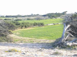Els terços de Can Jaumet Jaume, territori de la vénda de ses Roques. Foto: Vicent Ferrer Mayans.