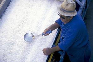 Ses Salines. Un saliner comprovant la qualitat de la sal produïda. Foto: Joan Costa / Arxiu d´imatge i so del Consell d´Eivissa.
