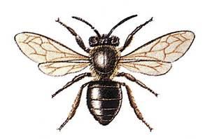 Una abella obrera.