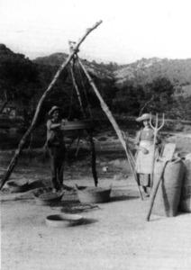 Agricultura. Els gambals de l´ereradora sostenen l´erer en una de les fases de la producció i el tractament del blat. Foto: extret d´<em>El llarg camí del pa a Formentera</em>.