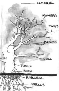 Esquema de les parts d´un arbre. Dibuix: Mario Stafforini.