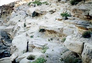 Arenoses burdigalianes en lloses separades per margues blanquinoses, subhoritzontals, a la zona de sa Galera, a Sant Antoni de Portmany. Foto: Bartomeu Escandell Prats.