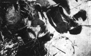 Arqueologia. A l´època de José María Mañá de Angulo es realitzà una de les escasses intervencions arqueològiques subaquàtiques. Vista de les restes d´un naufragi altimperial as Grum de Sal, prop de sa Conillera. Foto: Benito Vilar Sancho.