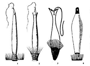Diverses boteres de les Pitiüses: 1 i 2 dibuixades per l´arxiduc Lluís Salvador; 3, del llibre de Víctor Navarro <em>Costumbres en las Pitihiusas</em> (1897); 4, del llibre <em>Qui vol peix... aportació a l´estudi dels ormeigs de pesca i al vocabulari nàutic de Formentera</em>, dels alumnes de 3r de BUP de l´Extensió de Formentera (1986).