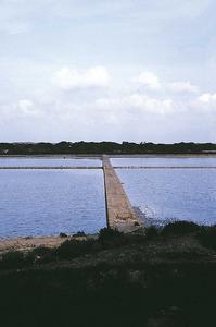Imatge d´una calçada als estanys d´en Marroig de Formentera. Foto: Enric Ribes i Marí.