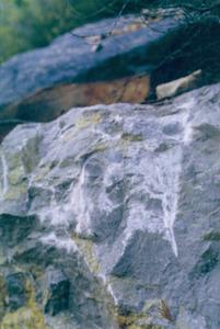 Calcarenites molt dures del puig d´en Calaveres. Foto: Bartomeu Escandell Prats.