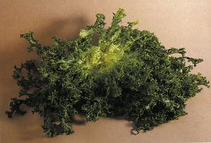 <em>Chicorium endivia</em>, endívia; fora de les Pitiüses també se la coneix amb el nom d´escarola. Foto: extret de <em>Normas de calidad para frutas y hortalizas</em>.