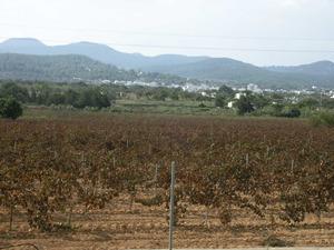 Un exemple de fossa d´esfondrament geològic: el pla de Sant Antoni de Portmany. Foto: Felip Cirer Costa.