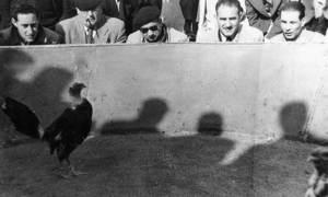 Una baralla de galls, a la gallera situada al cap del passeig de Vara de Rey. Foto: arxiu de Neus Riera Balanzat.