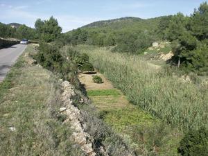Hort vora el torrent de ses Fonts o des Jondal, junt al pont de Davall sa Serra, a Sant Josep de sa Talaia. Foto: Chus Adamuz.