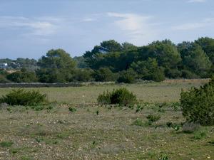 Un mitjà, o massa boscosa enmig de cdamps de conreu. Foto: Vicent Ferrer Mayans.