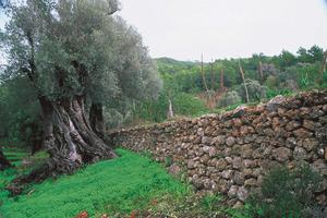 Una típica paret feta amb pedres, per subjectar la terra dels marges. Foto: David Carrera Bonet.