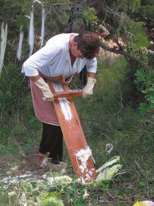 Acció de rascar la fulla de la pitrera per tal d´obtenir els fils de la malla. Foto: Catalina Sansano Costa.