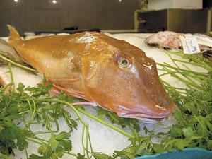 Un exemplar de rasfel, peix molt preuat de la gastronomia pitiüsa. Foto: Chus Adamuz.