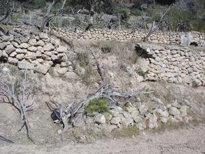 Un remoll o esllavissada d´una paret. Foto: Felip Cirer Costa.