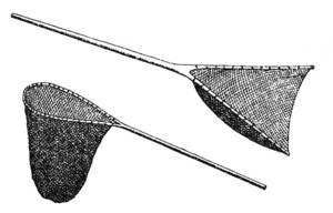 Dibuix de l´arxiduc Lluís Salvador de dos tipus de salabres.
