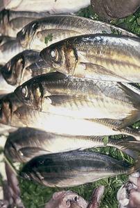 Exemplars del peix anomenat sorell (<em>Trachurus trachurus</em>). Foto: Josep Castelló Escandell.