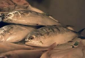 El verderol (<em>Seriola dumerili</em>) és un peix que en créixer es denomina círvia. Foto: Josep Castelló Escandell.