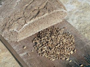Grans de xeixa i pa elaborat amb aquesta varietat de blat. Foto: Cristòfol Guerau d´Arellano Vilanova.